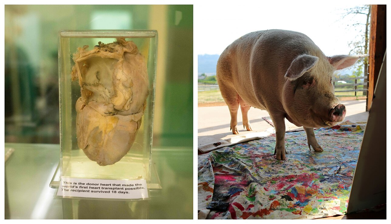 Mokslininkai paaiškino, kokią kiaulieną valgyti, kad nebūtų problemų dėl sveikatos