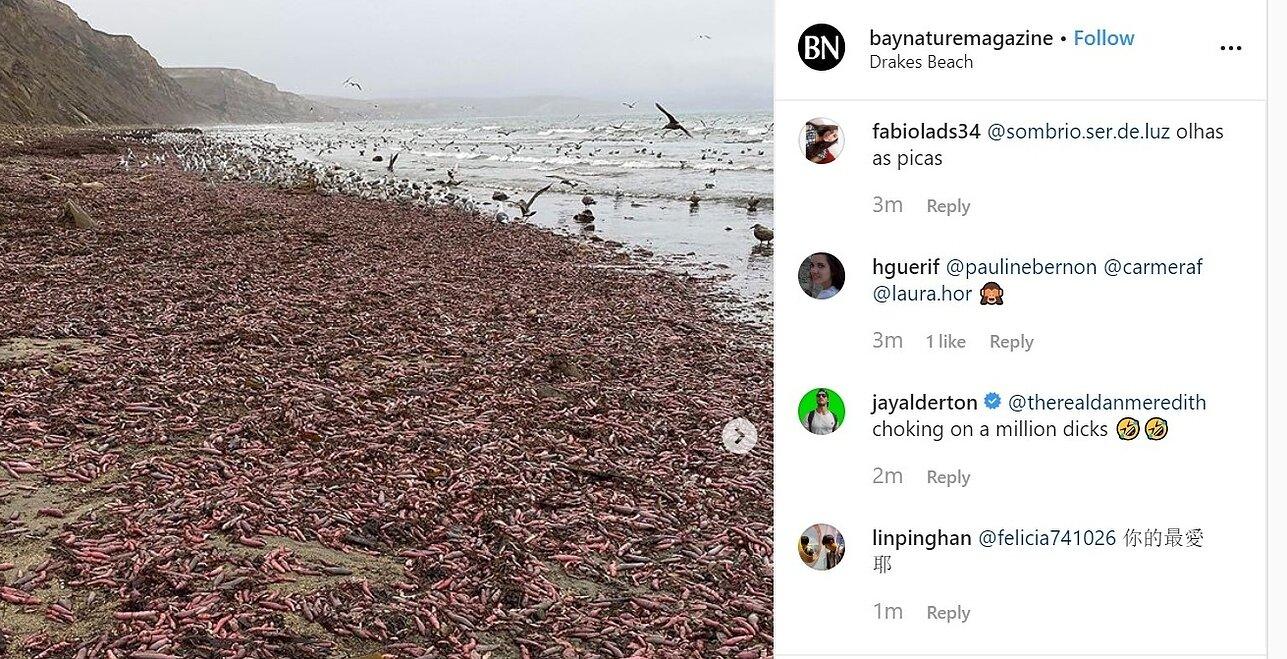 jūros kirminų varpos)