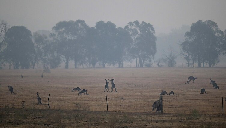 pietų australijos biologinės įvairovės strategija
