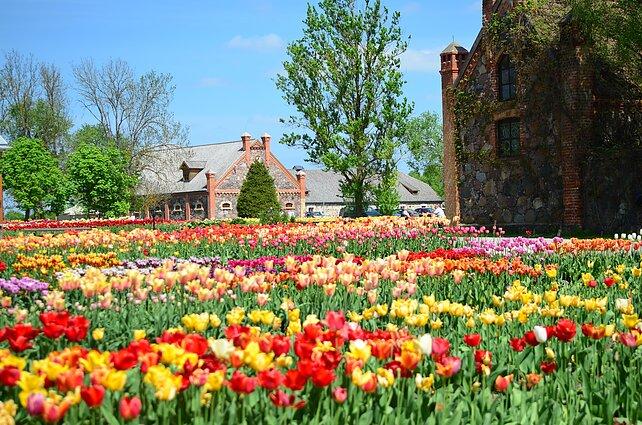 Tulpių žydėjimo šventė Burbiškėse