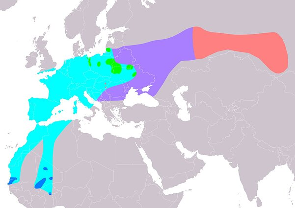 The distribution map of aquatic warbler (Acrocephalus paludicola) according to IUCN version 2019.1, Legend: Extant, breeding (green), Extant, passage (cyan), Extant, non-breeding (blue), Possibly Extant (passage) (purple), Probably extinct (pink)