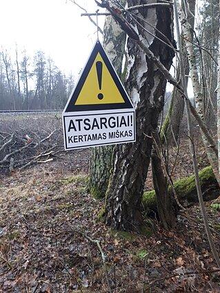Girulių miške kertami medžiai